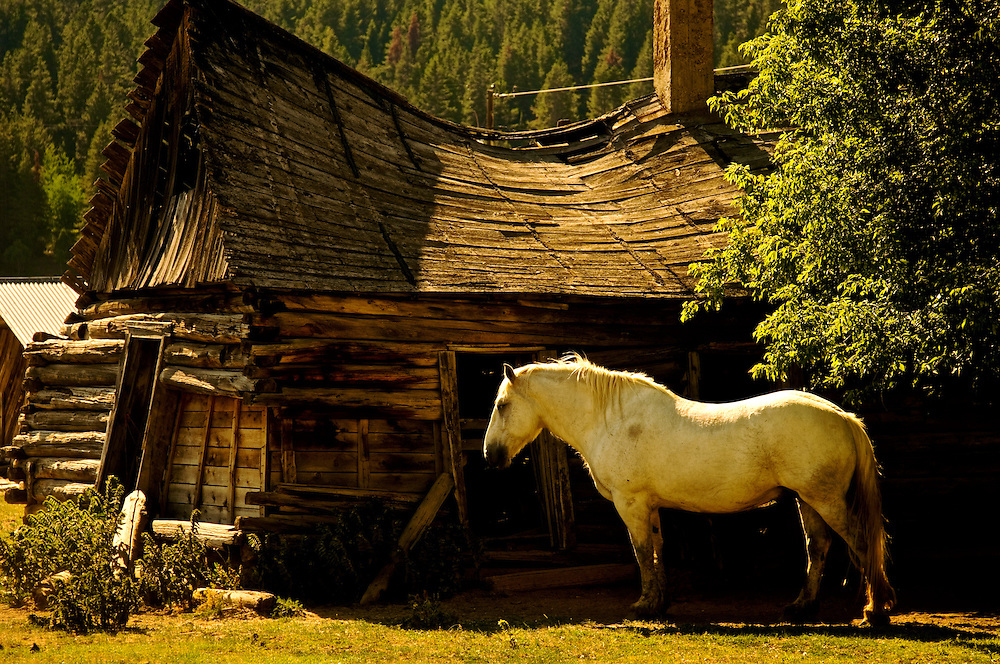 Horse and Collapsed Roof