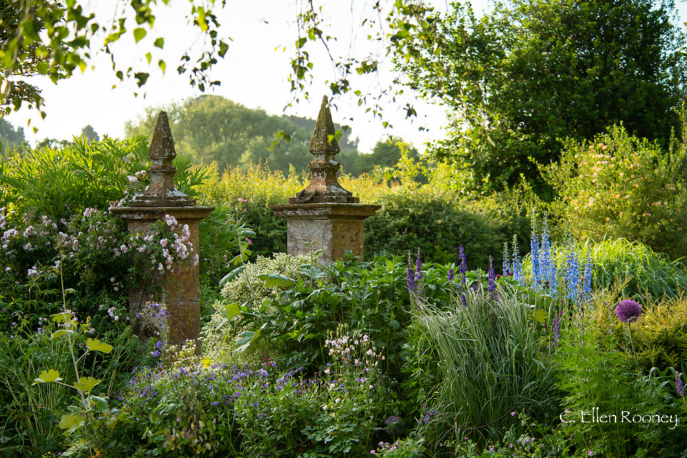 Delphinium Pacific hybrid, Rosa 'Blush Noisette' and Aconitum anglican around stone pillars at Lower Severalls Farmhouse,  Crewkerne, Somerset, UK