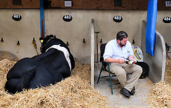 © Licensed to London News Pictures.14/07/15<br /> Harrogate, UK. <br /> <br /> A man sits pin a stall next to one of his cows on the opening day of the Great Yorkshire Show.  <br /> <br /> England's premier agricultural show opened it's gates today for the start of three days of showcasing the best in British farming and the countryside.<br /> <br /> The event, which attracts over 130,000 visitors each year displays the cream of the country's livestock and offers numerous displays and events giving the chance for visitors to see many different countryside activities.<br /> <br /> Photo credit : Ian Forsyth/LNP