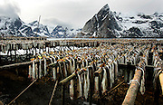 NORWAY LOFOTEN 29MAR07 - Stockfish racks in Hamnoy on the Lofoten islands.<br />