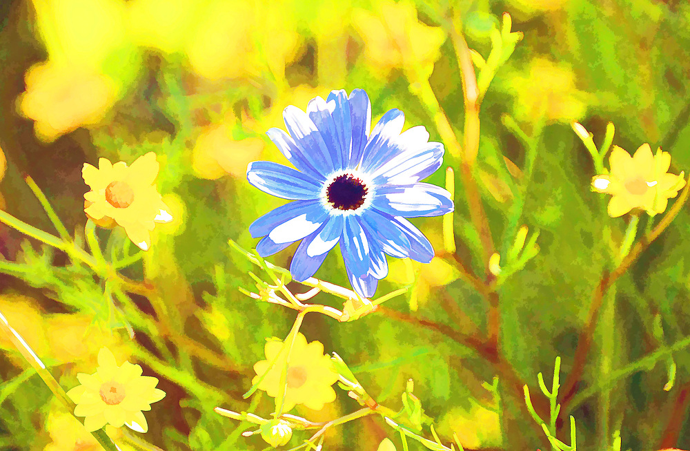 Digital Painting of Blue Daisy.