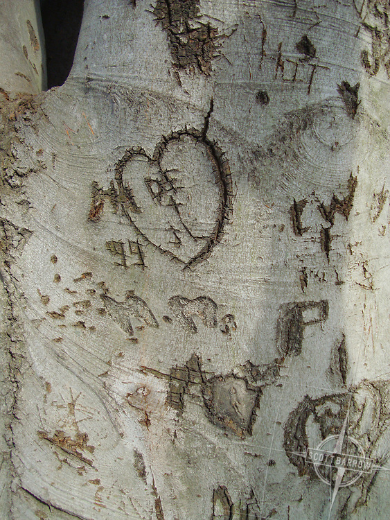 Names and initials carved on a tree.