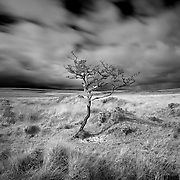 Tree on Dartmoor