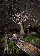 The skeletons of ancient bristlecone giants reach for the heavens as a burning meteor skims across the black Colorado sky. The meteor was entirely fortuitous as there were no major meteor showers occurring at the time of capture.