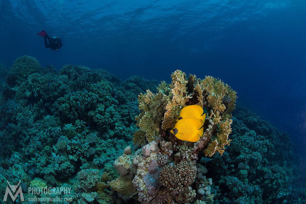 Dive Spot: Breakers house reef (left)