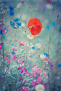 License:<br />