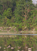 River and forest in Bardiya National Park, Nepal