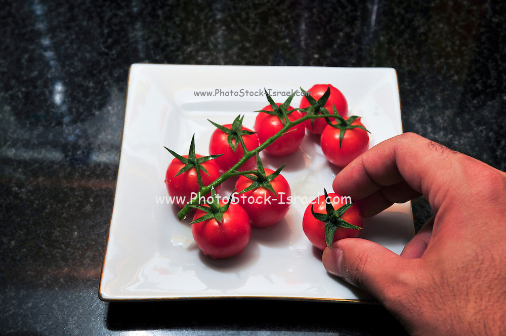 Cocktail tomatoes on white plate. Cultivated for their size, colour and durability. Hand selects one