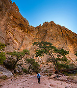 Sandstone walls tower above Spring Canyon in Capitol Reef NP, Torrey, Utah, USA. In Capitol Reef National Park, we hiked impressive sandstone gorges from Chimney Rock Trailhead over to Spring Canyon and down to a car shuttle at Highway 24 (10 miles one way with 1100 ft descent and 370 ft gain). This image was stitched from multiple overlapping photos.