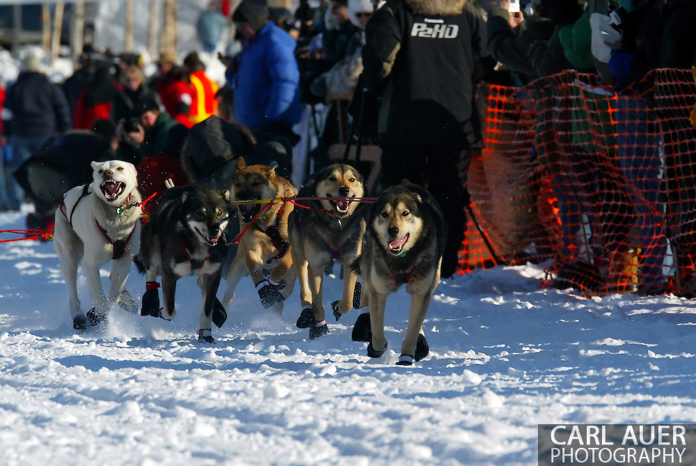 3/4/2007:  Willow, Alaska -  These dogs were born to run and pull, as can be seen here in the faces of the lead dogs of Veteran Paul Gebhardt of Kasilof, AK as they race across Willow Lake at the start of the 35th Iditarod Sled Dog Race