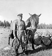 Portrait of man holding reins of small horse in countryside farming area, Finland 1959