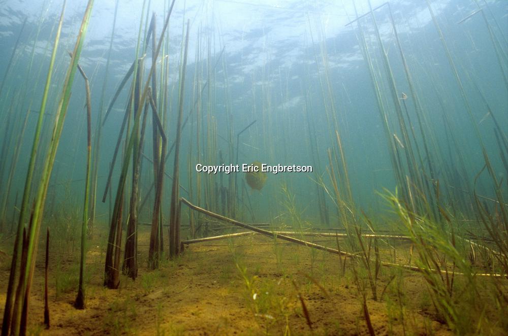 Underwater Scene<br /> <br /> ENGBRETSON UNDERWATER PHOTO