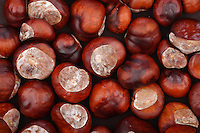 Chestnut on wooden background - studio shot