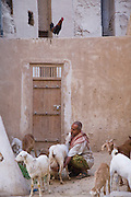 "A man milks a goat in a backyard in the town of Shibam, Hadhramawt, Yemen. Shibam is a World Heritage Site. The old walled city with it's talk mud brick buildings has been called 'the Manhattan of the desert""."