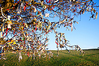 Close-up view of Fairy Tree at Hill of Tara, Ireland