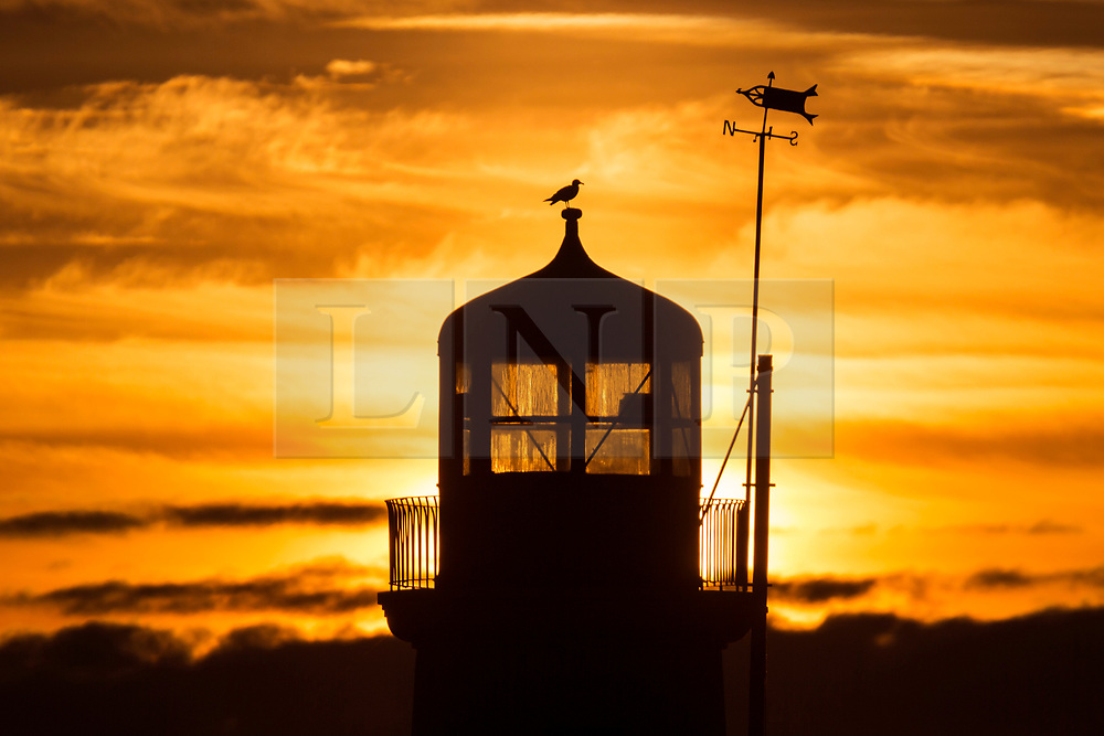 © Licensed to London News Pictures. 25/03/2018. Scarborough UK. A bird sits on top of Scarborough light house on the Yorkshire coast at sunrise this morning. Photo credit: Andrew McCaren/LNP