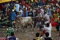 A bull has his tailed pulled during the annual Corralejas in Sincelejo, Colombia on Saturday, January 19, 2008. The corraleja, a bullfighting ritual in northern Colombia pitting hundreds of amateur matadors, many in advanced stages of inebriation, against a 900-pound bull. Regarded in other parts of Colombia as a bizarre spectacle, the corralejas are passionately defended by people of the northern savannas, an impoverished region. (Photo/Scott Dalton).