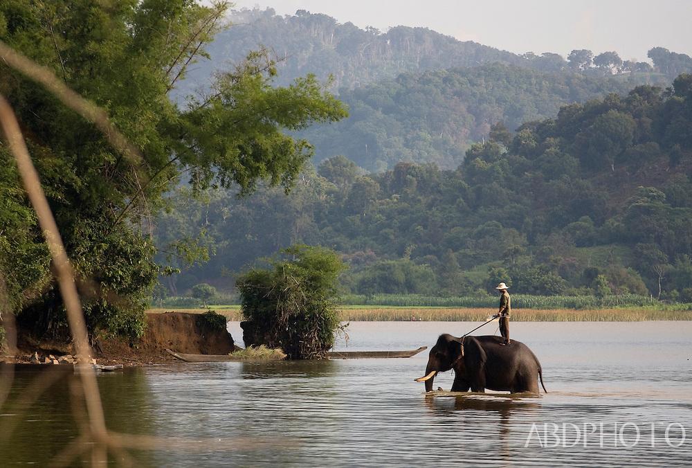 Elephant Dak Lak Lake Vietnam