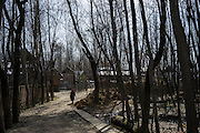 A village woman walks down a muddy road flanked by dead trees in Purnishadashah village, Jammu and Kashmir, India, on 24th March 2015. Nearly 2500 villagers including Srinagar, the capital of the state of Jammu and Kashmir, was devastated by severe floods and landslides in September 2014 the worst in 60 years, displacing millions of people, many of them children. Photo by Suzanne Lee for Save the Children