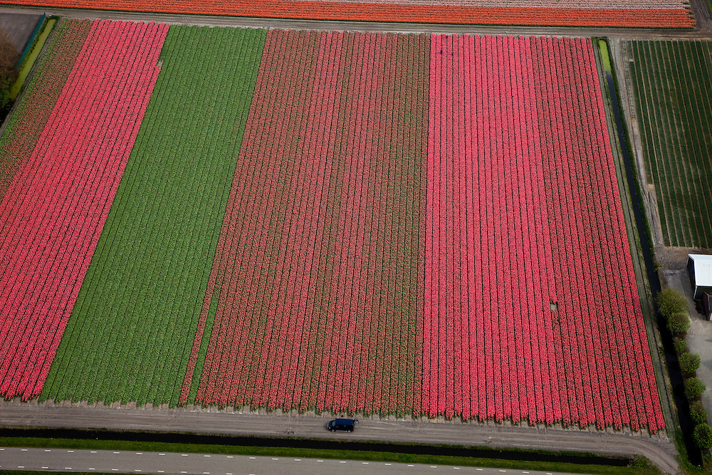 Nederland, Noord-Holland, Gemeente Anna Paulowna, 28-04-2010; bloembollenvelden in de Anna Paulowna Polder met voornamelijk tulpen. Door de zandgrond is de polder in Kop van Noord-Holland (Noordkop) is een ware bollenstreek..Flower fields in the Anna Paulownapolder, with mostly tulips. Because of the sandy soil the polder in the very north of North-Holland is a true flower bulb region. .luchtfoto (toeslag), aerial photo (additional fee required).foto/photo Siebe Swart