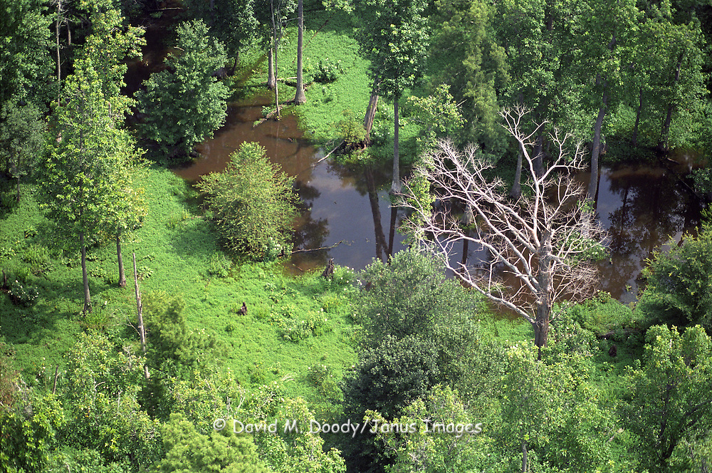 Aerial view: wetlands along the upper portion of the Chickahominy River, Virginia.