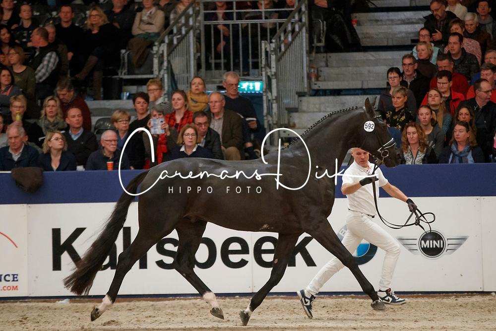 592, Khan S<br /> KWPN Stallionshow - 's Hertogenbosch 2018<br /> © Hippo Foto - Dirk Caremans<br /> 03/02/2018