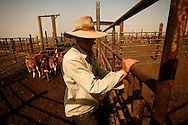 Yehuda Gilad 27 working in the cattle-shed in Moshav Yehonatan in the Golan height Israel. Tuesday,October, 02, 2007....