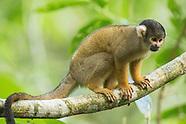 Peru Amazonian mammals