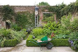 Gardener on ladder pruning clematis at Sissinghurst Castle Garden