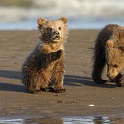 Siblings Exploring the Beach