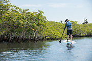 Paddleboarding in the Galapagos Islands with SUP the Mag and Southern Explorations.