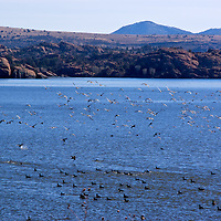 Birds over Water on Watson Lake near Prescott, Arizona. We were down for the Christmas bird count and one can see why birders come to this lake.