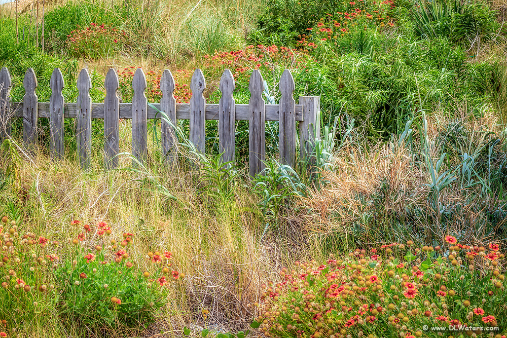 Picket fence and gaillardia flowers at the Outer Banks of NC.
