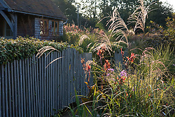 Backlit miscanthus in the sales area at Marchants Nursery
