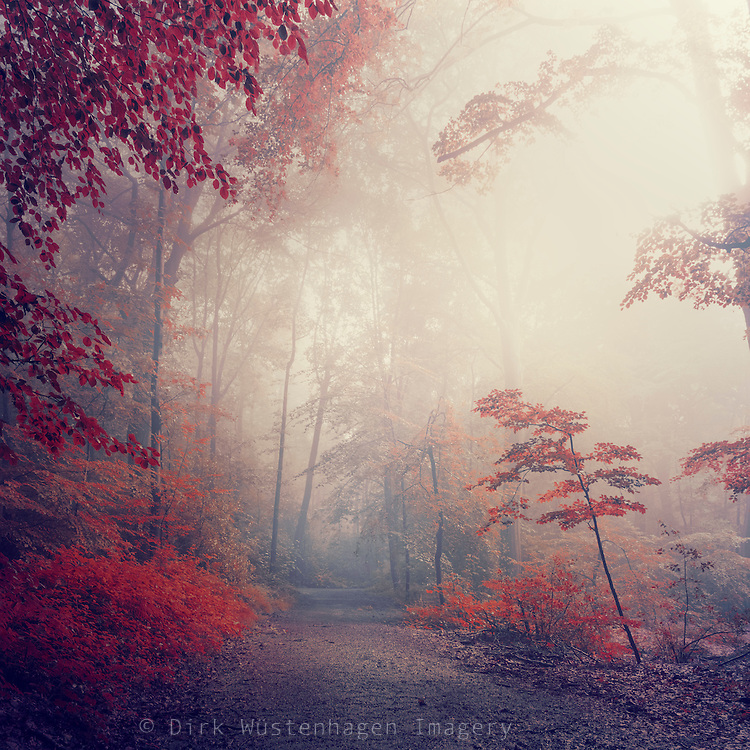 Forest in morning fog & backlight - manipulated photograph