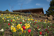 Spring at Saffron Fields Vineyard, Yamhill-Carlton AVA, Willamette Valley, Oregon