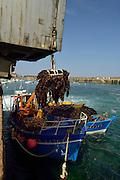 Laminaria hyperborea is a kelp species commercially exploited by the cosmetic and agrochemical industries. For biotechnological applications, and by the food industry for emulsifiers and gelling agents. And the hydrocolloid industry. | Der Palmentang (Laminaria hyperborea) ist eine Braunalge und wird in dem alten Haven von Roscoff von kleinen Booten in einen LKW umgeschlagen. Der LKW bringt die Algen zu einer Fabrik, wo die Extraktion von Alginat vorgenommen wird. Roscoff, Frankreich