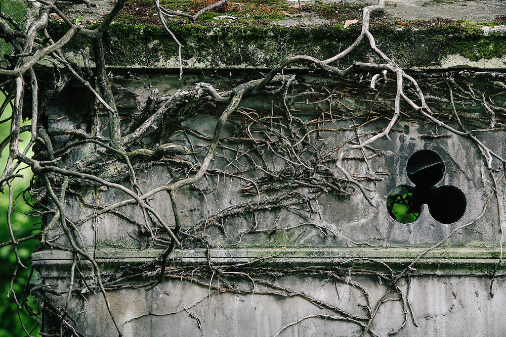 Old vines cover the top of a mausoleum in a european cemetery
