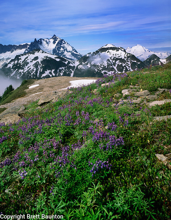 Mt. Shuksan, Mt. Baker, Hannegan Peak, Lupine, Wildflowers, North Cascades, Mt. Baker Wilderness Area, WA