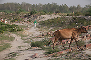 Cows and their shepherd are walking by the ruins of the controversial 'Taj Heritage Corridor', sitting between the Agra Fort and the Taj, and next to the heavily polluted and dry Yamuna River, in Agra.