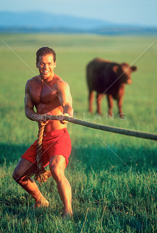 sexy man without a shirt having a tug of war on a ranch while a cow looks on