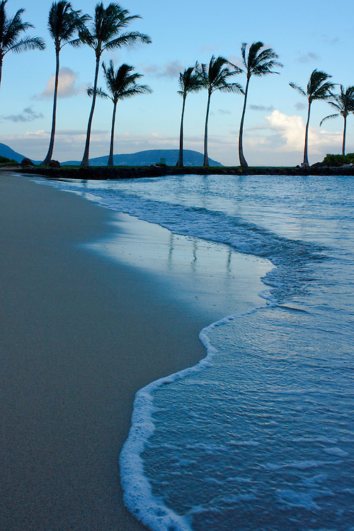 Beach foam and palm trees, Kahala, Oahu, Hawaii