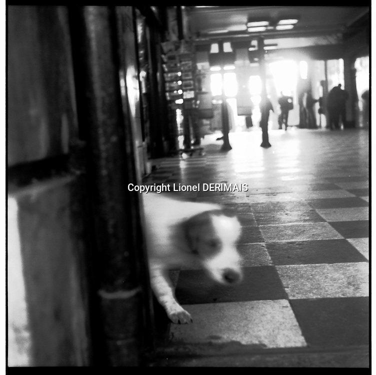 London homeless and their dogs. A small dog at Embankment station, London.