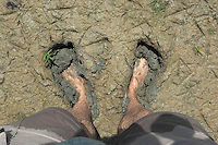 Photographer, Laurent Geslin's bare feet in mud along the border of lake Belau Nature Reserve, Moldova, June 2009