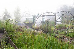 Misty morning in the stock nursery at Glebe Cottage