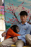 Visitors of Beijing Zoo can have their picture taken with one of the resident chimps.