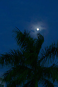 Phnom Penh, Cambodia. Full moon and palm.