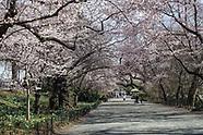 Central Park-Spring