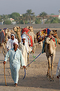 Early morning is the busiest time at the Camel Market. Racing camels.