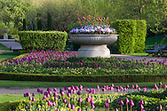 Tulips in a stone urn in Regent's Park in spring. London, UK